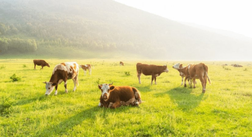 Çiftçilerimize Ziraat Bankası Üzerinden Hayvancılık Destekleri Sağlanıyor