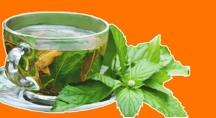 Bitki Çayı Üretimi Farklı Bir Fikir