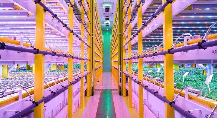 Bitki Fabrikalarıyla Tarım Ürün Fiyatları İstikrar Kazanacak