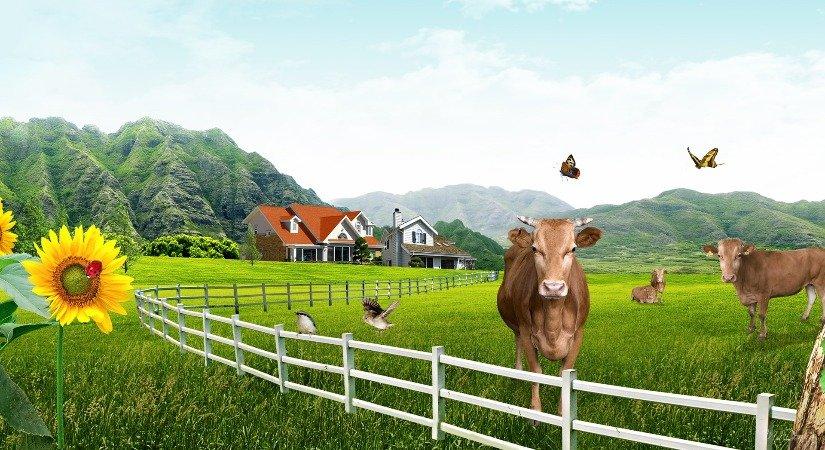 Çiftlik Kiralama İle İş Fikirlerinizi Hayata Geçirin