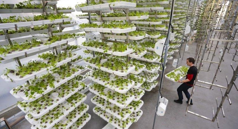 Dikey Topraksız Tarım Yeni Bir İş Modeli