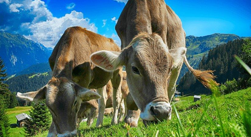 Hayvancılık Desteği Kapsamında Bulunan İller Hangileridir?