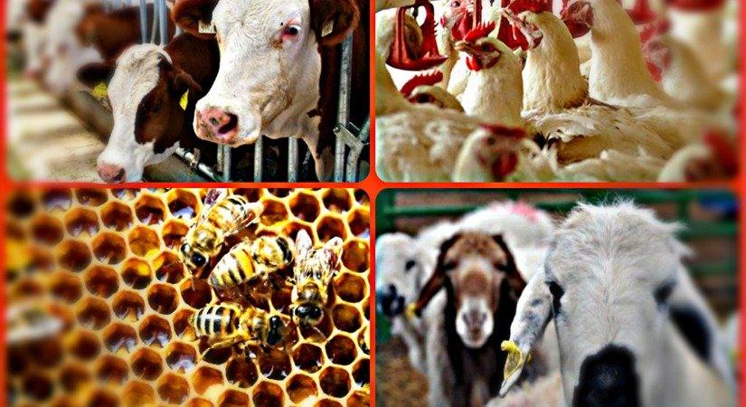 Hayvancılık Ve Yetiştiriciliği Üzerine 50 İş Fikri