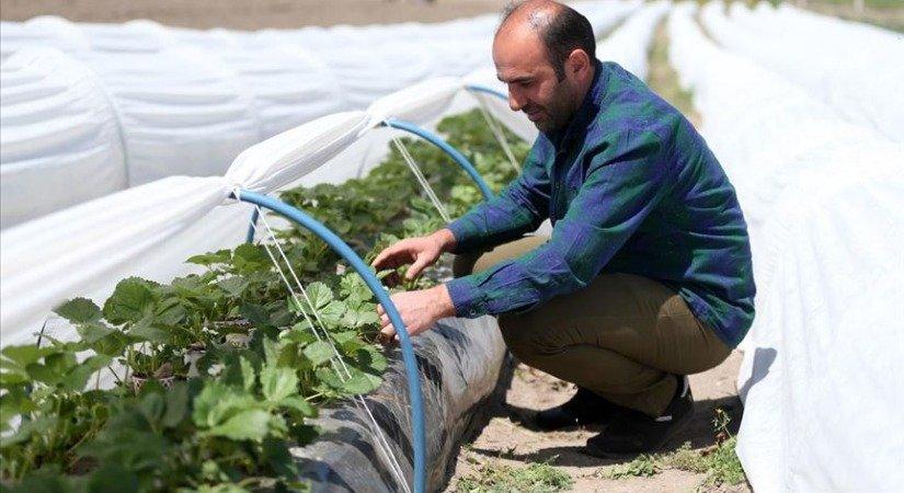 Hobi Olarak Başladığı Çilek Üretiminde Talebe Yetişemeyince Profesyonel Tarıma Geçti
