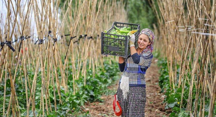 İyi Tarım ve Organik Tarım Destek Ödemeleri 20 Eylül'de Başlayacak