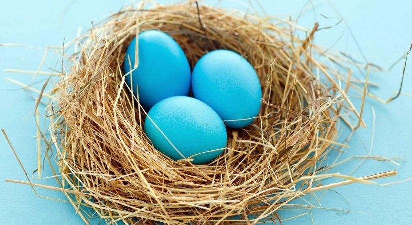 Mavi Yumurta Ticareti İçin Tavuk Yetiştiriciliği