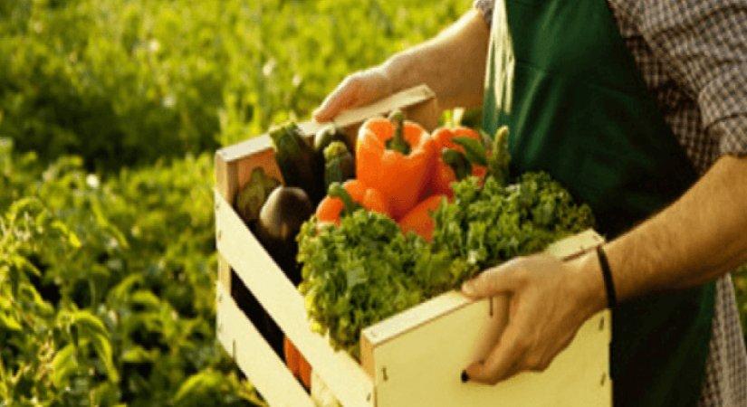 Organik Tarım İçin Sağlanan Destekler Nelerdir?