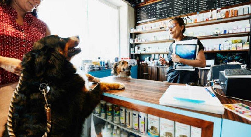 Pet Shop Açmak İsteyenlerin Bilmesi Gerekenler