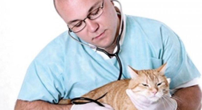 Yeni iş fikirleri - Hayvan Hastanesi Açmak